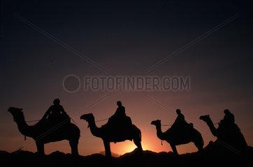Kamelkarawane bei Sonnenuntergang  Aegypten