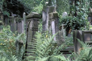 Juedischer Friedhof in Breslau