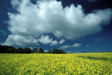 Wolken ueber Rapsfeld