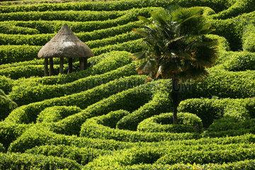 GB Glendurgan Gardens - Labyrint