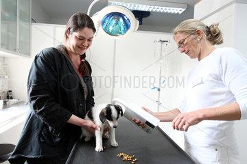Dallgow-Doeberitz  Deutschland  eine Tieraerztin untersucht einen Hunde-Welpen