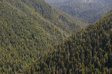 Tree covered rolling mountains  Olympic National Park  Washington  USA