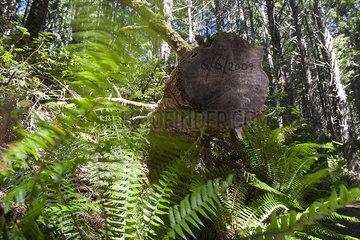 Date written on trunk of cut tree in forest
