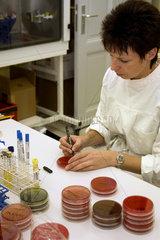 Berlin  Deutschland  MTA beschriftet Bakterienkulturen
