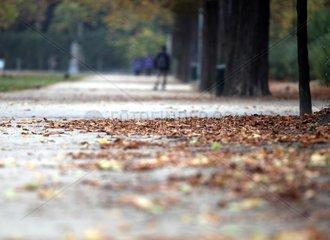 Herbstblaetter in einem Park