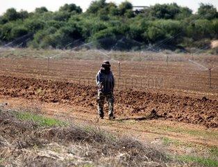 Feldarbeiter in Israel