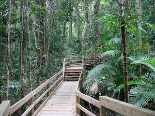 Dschungel in Australien