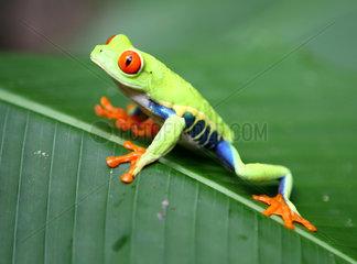 COSTA RICA-SAN JOSE-ANIMALS