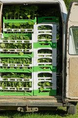Plants loaded in van
