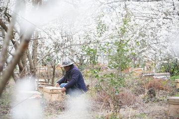 CHINA-GUIZHOU-CHERRY BLOSSOM-BEE-FARMING(CN)