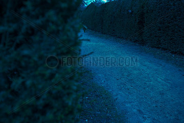 Path in hedge maze