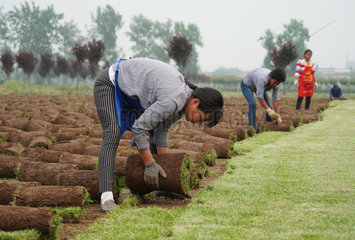 CHINA-XI'AN-RURAL ECONOMY-TURF-BUSINESS (CN)