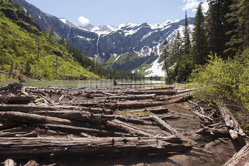 Beaver dam in mountain pond  Glacier National Park  Montana  USA