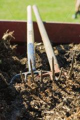 Gardening forks resting on bed of soil