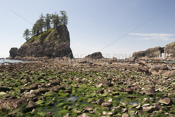 Seaweed washed ashore on rocky beach in Olympic National Park  Washington  USA