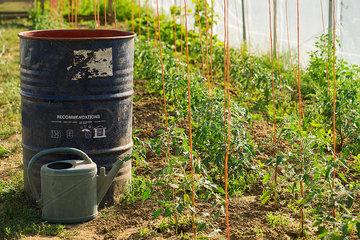 Rain barrel and watering can in vegetable garden