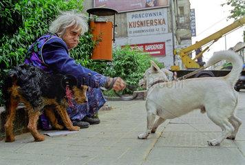 Poznan  verarmte  aeltere Frau mit Hund