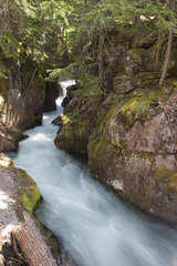 Stream flowing through woods in Glacier National Park  Montana  USA