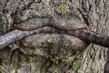 Baum fressen Stange auf