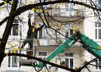 Baumpflege eines Strassenbaums
