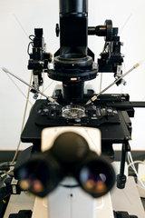Berlin  Deutschland - Mikroskop fuer kuenstliche Befruchtung nach der ICSI-Methode (Intrazytoplasmatische Spermien Injektion).