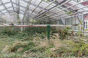 Lost Greenhouse