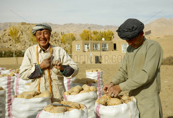 AFGHANISTAN-BAMYAN-AGRICULTURE-POTATO