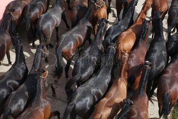 Gestuet Graditz  Vogelperspektive  Pferde im Schritt auf einem Sandpaddock