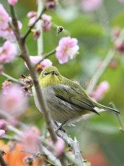 CHINA-FUJIAN-BIRD (CN)