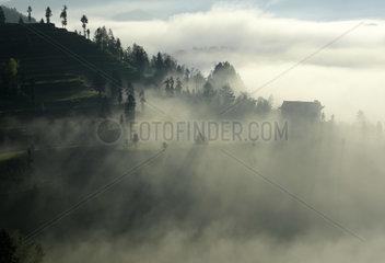 #CHINA-HUBEI-ENSHI-FOG-TEA PLANTATION(CN)