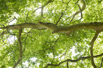Tree canopy  low angle view