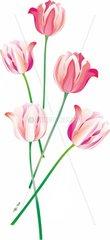 Fuenf Tulpen