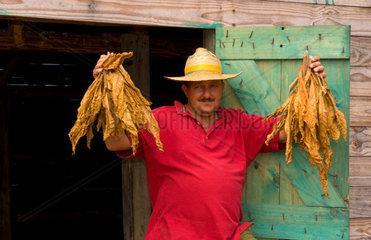 Farmer near barn to dry tobacco in tobacco fields in primative methods in Sierra del Rosario Cuba
