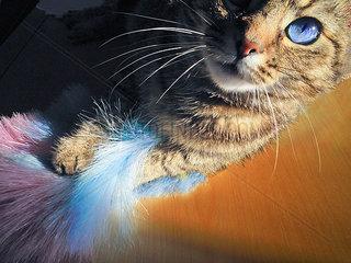Katze spielt mit einem Staubtuch
