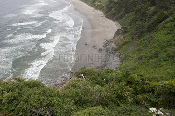 Steep cliffs and beach in Redwood National Park  California  USA