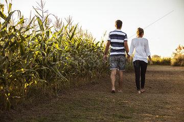 Couple walking along dirt road next to cornfield