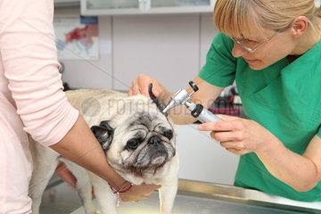 Behandlungszimmer einer Tierarztpraxis