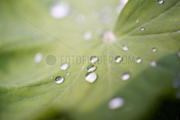 Close-up of dew drops on leaf