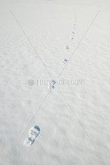 Berlin  Deutschland  Fussspuren im Schnee auf dem zugefrorenen Rummelsburger See