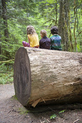 Children sitting together on large tree trunk  rear view