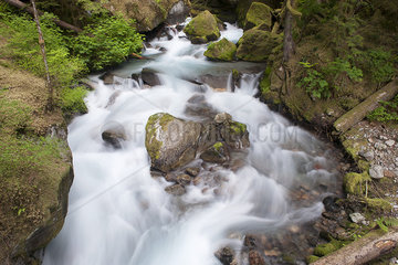 Water flowing over mossy rocks in North Cascades National Park  Washington  USA