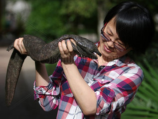 CHINA-CHINESE GIANT SALAMANDER-STUDIES (CN)