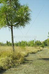 Tropical tree growing beside path through countryside