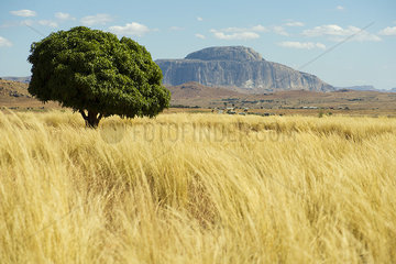 Tranquil countryside in Madagascar