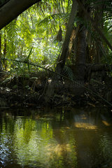 Tropical swamp