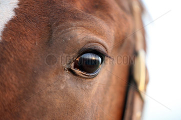 Goerlsdorf  Deutschland  Augenpartie eines Pferdes