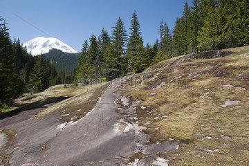 Wooded hillside in Mount Rainier National Park  Washington  USA