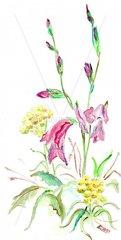 Spanische Wildblumen
