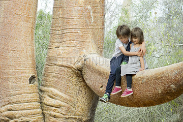 Children sitting together on baobab tree branch