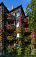 Berlin  Deutschland  ein mit Wein bewachsenes Haus in Berlin-Pankow